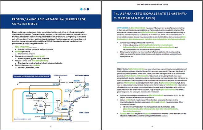 Organic Acids Interpretation Guide